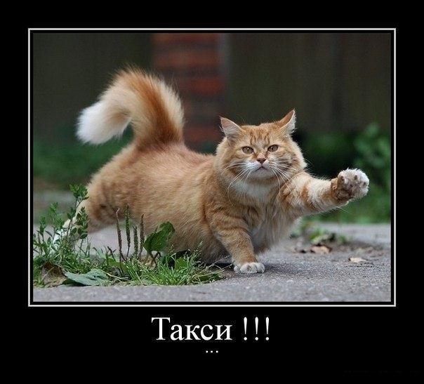 Прикольный кото демотиватор